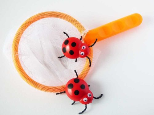 Net & Ladybirds