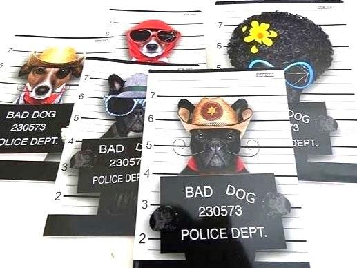 Bad Dog Designer Exercise Book